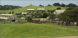 Ace Hi Riding Ranch - Accommodation Gold Coast