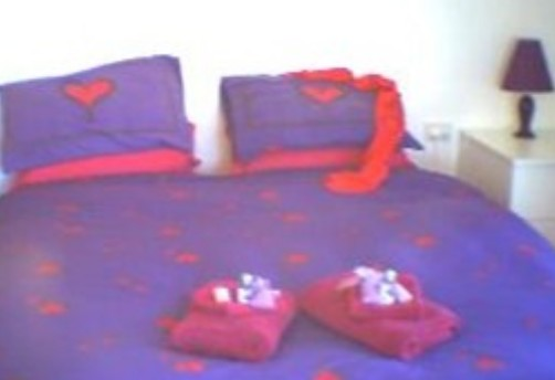 Aloomba Lavender - Accommodation - Accommodation Gold Coast