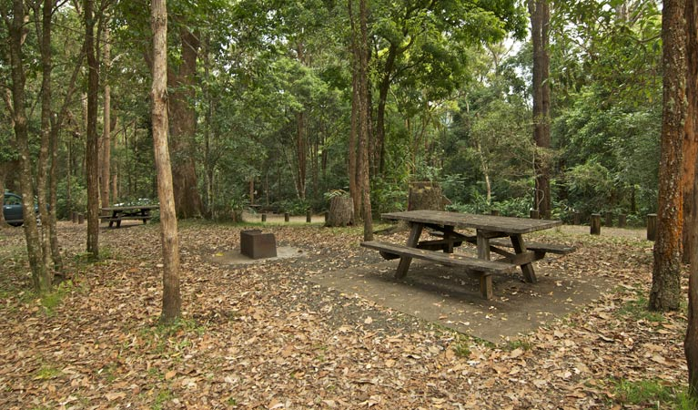 Sheepstation Creek campground - Accommodation Gold Coast