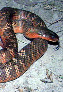 Armadale Reptile  Wildlife Centre - Accommodation Gold Coast