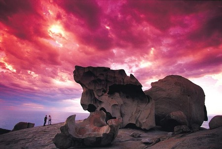 Kangaroo Island Adventure Tour 2 day/1 night - Accommodation Gold Coast
