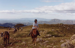 High Country Horses - Accommodation Gold Coast