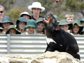 Tasmania Zoo - Accommodation Gold Coast