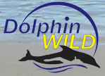Dolphin Wild - Accommodation Gold Coast