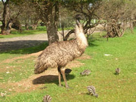 Minlaton Fauna Park - Accommodation Gold Coast