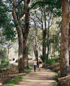 Law Trail and Lotterywest Federation Walkway Kings Park - Accommodation Gold Coast