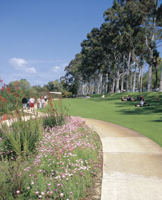 Kings Park Free Guided Walks - Accommodation Gold Coast
