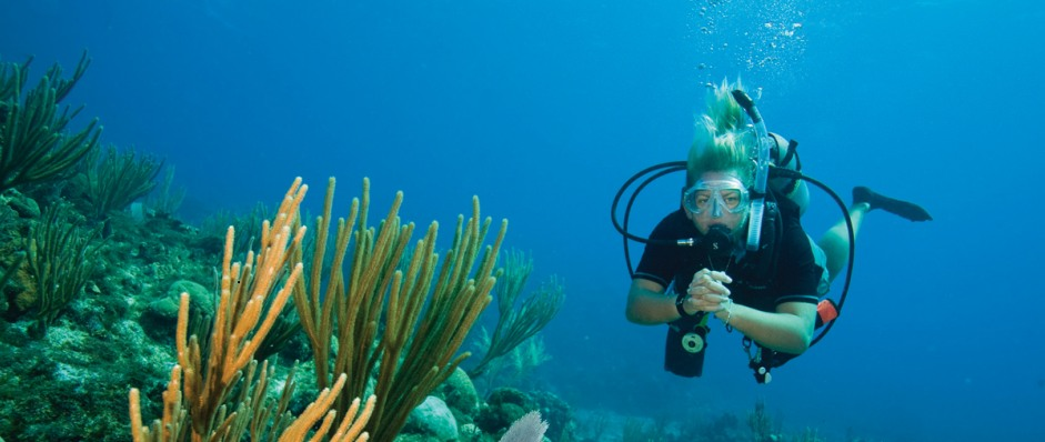 Coastal Water Dive - Accommodation Gold Coast