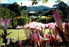 Blueberry Cottage Open Gardens - Accommodation Gold Coast
