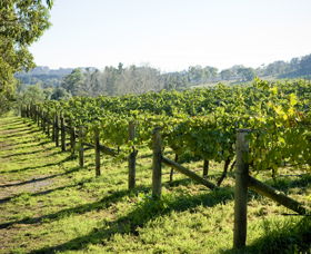 Surveyor's Hill Vineyards - Accommodation Gold Coast