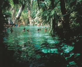 Mataranka Thermal Pool - Accommodation Gold Coast