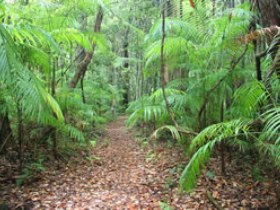 Delicia Road Conservation Park - Accommodation Gold Coast