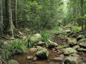Amamoor State Forest - Accommodation Gold Coast