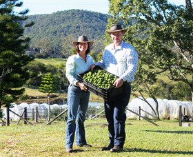 Hinterland Feijoas - Accommodation Gold Coast