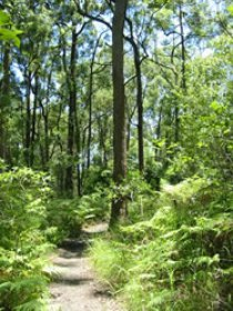 Mapleton Falls National Park - Accommodation Gold Coast