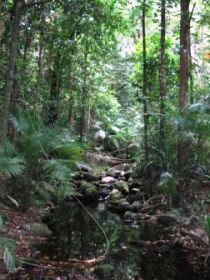 Mossman Gorge Rainforest Circuit Track Daintree National Park - Accommodation Gold Coast