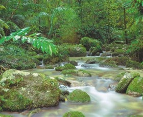 Mossman Gorge Daintree National Park - Accommodation Gold Coast