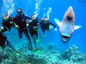 Gotham City Dive Site - Accommodation Gold Coast