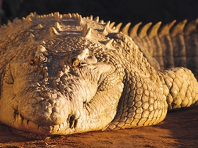 Koorana Crocodile Farm - Accommodation Gold Coast