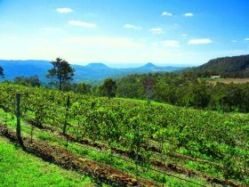 Preston Peak Wines - Accommodation Gold Coast