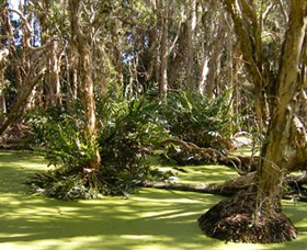 Arkarra Lagoons and Tea Gardens - Accommodation Gold Coast