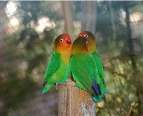 Ballarat Bird World - Accommodation Gold Coast