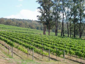 Piedmont Vineyard - Accommodation Gold Coast