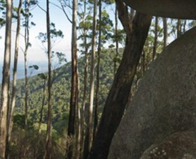 Gulaga National Park - Accommodation Gold Coast
