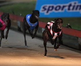 Dapto Dogs - Accommodation Gold Coast
