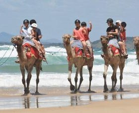 Camel Rides with Coffs Coast Camels - Accommodation Gold Coast