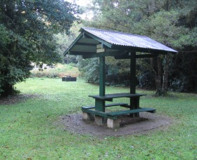 Pine Creek State Forest - Accommodation Gold Coast