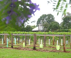 Douglas Vale Historic Homestead  Vineyard - Accommodation Gold Coast