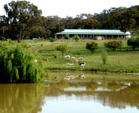 Clearview Alpacas - Accommodation Gold Coast