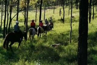 Hunter Valley Horse Riding and Adventures - Accommodation Gold Coast