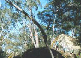 Dergholm State Park - Accommodation Gold Coast