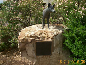 Dingo Statue - Accommodation Gold Coast