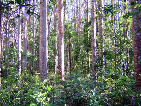 Cathu State Forest - Accommodation Gold Coast