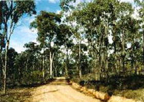 Paddys Ranges State Park - Accommodation Gold Coast