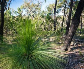 Brisbane Ranges National Park - Accommodation Gold Coast