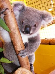 Cooberrie Park Wildlife Sanctuary - Accommodation Gold Coast