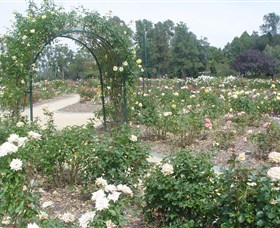 Victoria Park Rose Garden - Accommodation Gold Coast