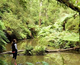 Morwell National Park - Accommodation Gold Coast