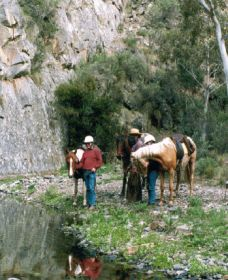 Yarramba Horse Riding - Accommodation Gold Coast