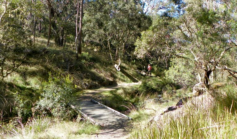 Wollomombi walking track - Accommodation Gold Coast