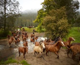 Glenworth Valley Horse Riding - Accommodation Gold Coast