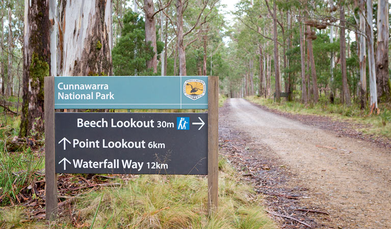 Beech lookout - Accommodation Gold Coast