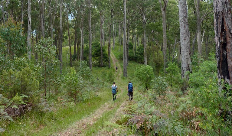 The Green Gully track - Accommodation Gold Coast