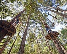 TreeTop Adventure Park Central Coast - Accommodation Gold Coast