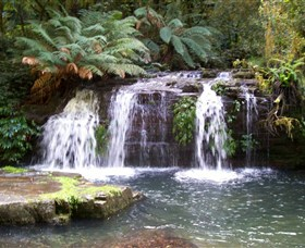 Barrington Tops National Park Walks - Accommodation Gold Coast