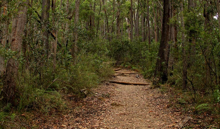 Pigeon House Mountain Didthul walking track - Accommodation Gold Coast